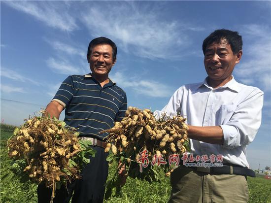 平度市同和镇西华里村和西侯家庄的农民们看着刨出来的花生,喜笑颜开。
