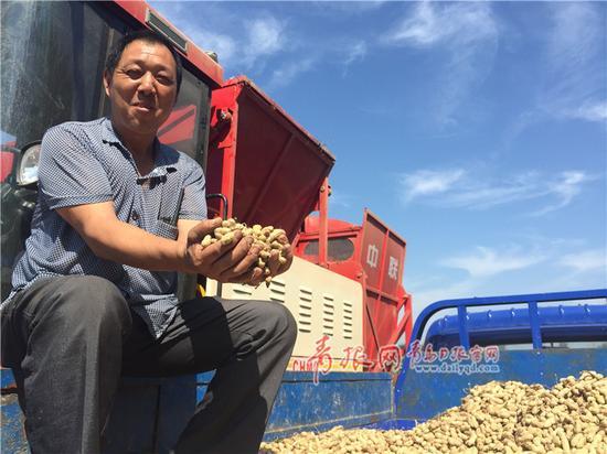 以往花生收获纯靠手工,劳动强度大。图为采用机械化收获花生的农民。