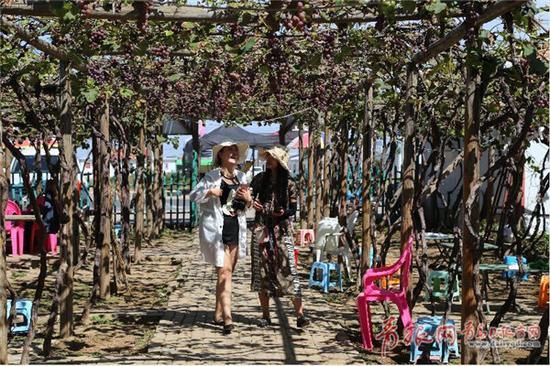 游客在葡萄采摘园游玩。王雷 摄