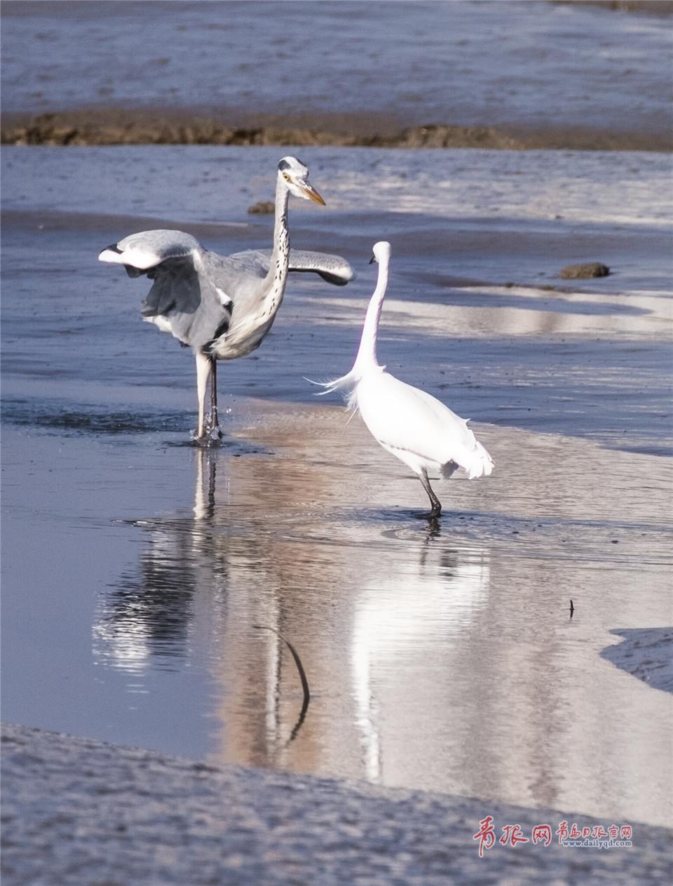 在几年前,这里却是河道干涸、污水横流。如今,经过整治的墨水河河水清澈、水量充沛,不时有水鸟在水中嬉戏,静谧而又美好。