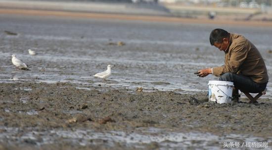2017年10月25日,市民在青岛胶州湾沧口海滩赶海。这片海叫沧口八厂海,海产品丰盛。