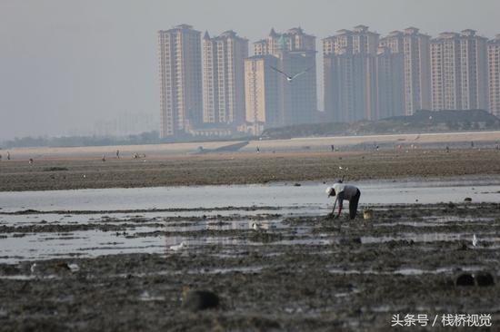 2017年10月25日,市民在青岛胶州湾沧口海滩赶海。