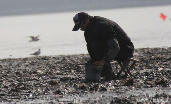 海鸥相伴市民在青岛胶州湾沧口海滩赶海。