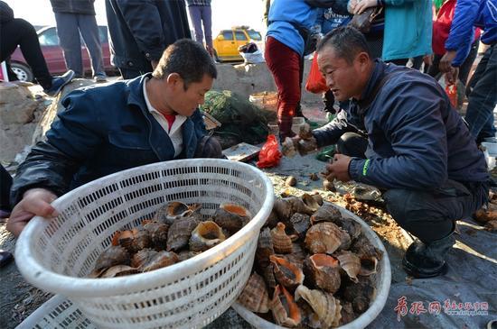 青岛市姜戈庄渔村码头,两位市民在抢购海螺。