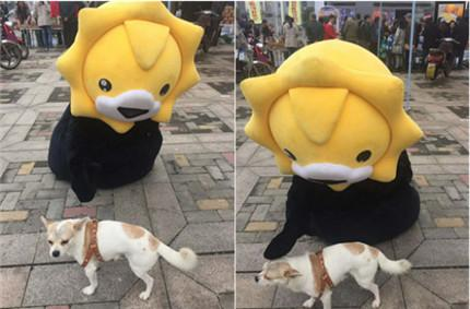 """狗狗在嗨购市集现场遭到小狮子人偶""""爱抚"""""""