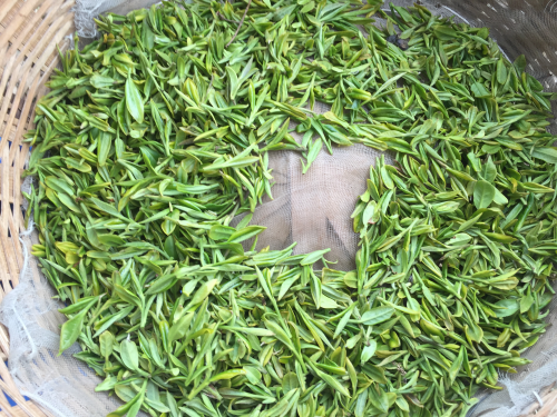 大田茶价格与往年持平