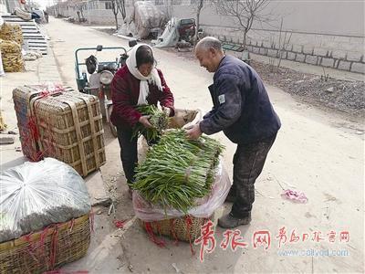 """▲大于家村村民正在将有""""双证""""的春韭菜装筐。 刘 岱 摄"""