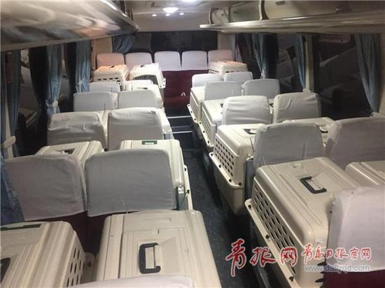 ▲二十只企鹅宝宝搭乘专机抵达青岛