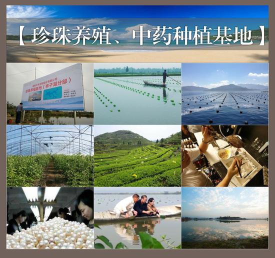 九云珠珍珠、中药养殖基地