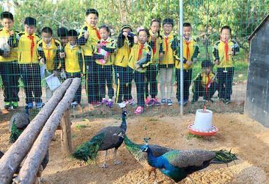青岛一学校将动物园搬进校园