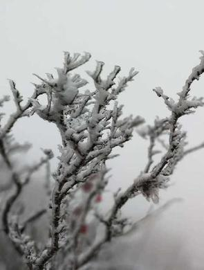 三月飘雪!崂顶银装素裹景色撩人