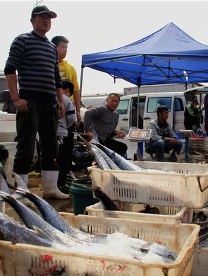 鲅鱼跳丈人笑 青岛的女婿们你们买鲅鱼了吗?