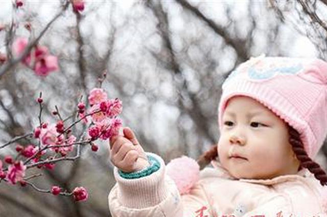 青岛梅园本周迎来最美花期 梅花节明天开幕