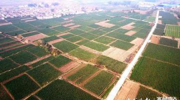 航拍章丘大葱千亩精品区 章丘一共有12万亩葱地