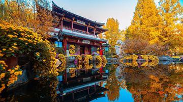 济南:趵突泉公园菊展为秋日增色