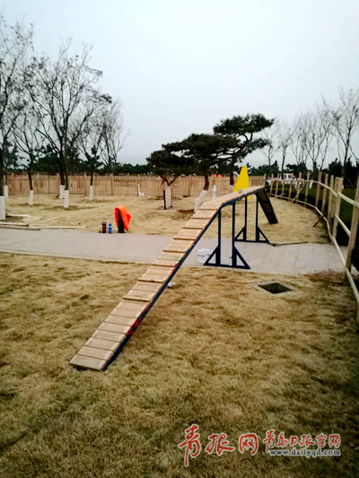 省内首个公益性宠物乐园崂山区启用 2万平米撒欢