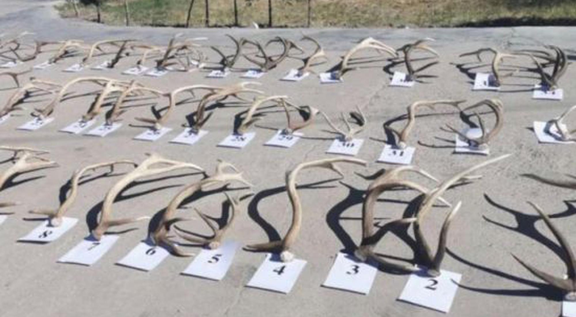 青海都兰县警方查获一起非法收购、运输、 出售珍贵濒危野生动