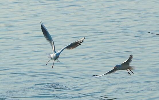 泸州:一江清水引海鸥