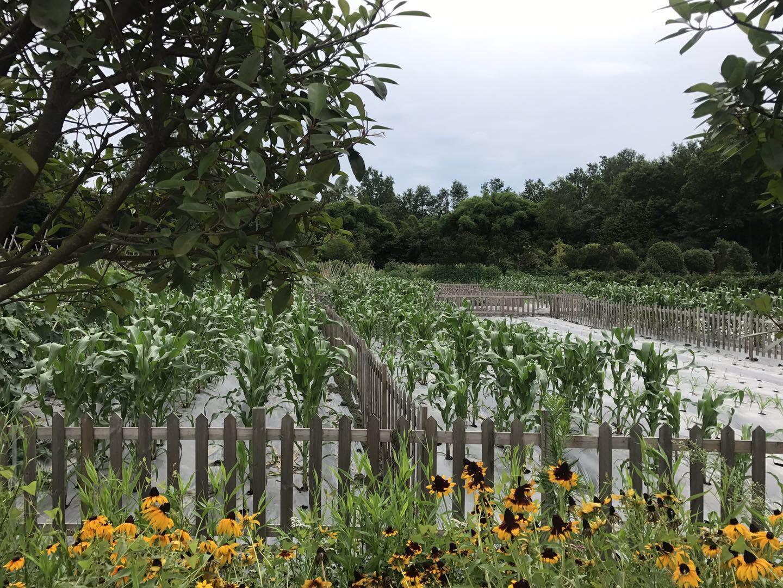 到2020年 四川主要农作物耕种收综合机械化率达到63%