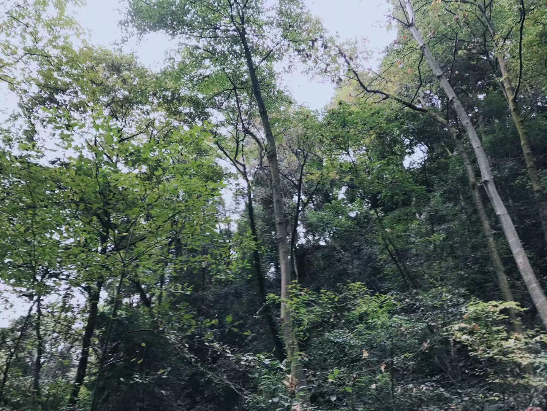"""构建""""一轴五屏""""自然保护空间格局 到2025年底全川森林覆盖"""