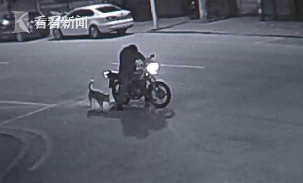 笑晕!醉驾男子与狗对骂半小时 最后狗狗赢了