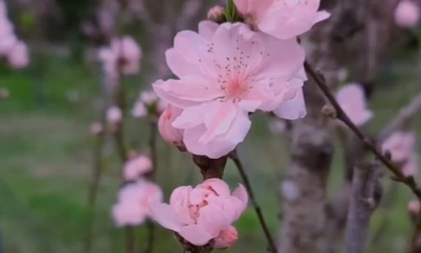 降温也阻挡不了的赏花心 乐山市民纷纷打卡绿心公园
