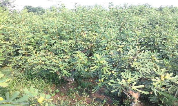 半年造林54170亩 大规模绿化内江首战告捷