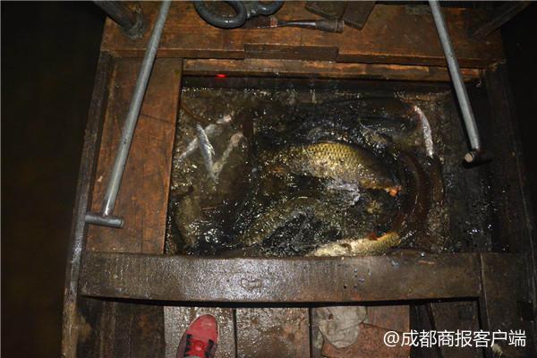 禁渔期常电捕鱼 长江航运抓获今年首例非法捕捞嫌犯