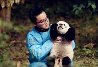 """探访四川""""熊猫奶爸"""""""