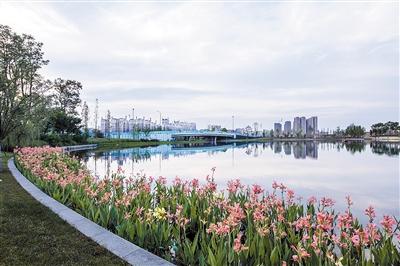 新川湿地公园明年全面建成 成都再添一个天然净水器
