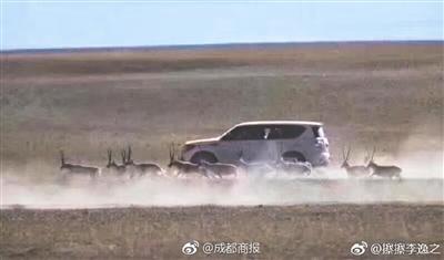 越野车追逐藏羚羊 警方:涉案7人被控制
