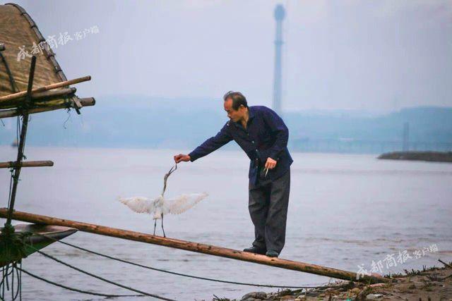 宜宾夫妻打渔时救起一只白鹭 它从此不愿离开
