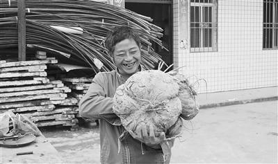樂山犍為村民地里挖出15公斤重紅薯 專家:實屬少見