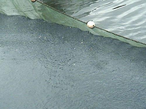 泸州两男子禁渔期内非法猎杀一条胭脂鱼获刑