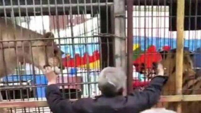 山西官方回应马戏团老虎出笼:两轻伤儿童已出院