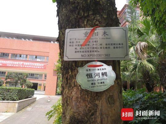 成都高校内惊现濒危动物 学生:都是树牌惹的误会