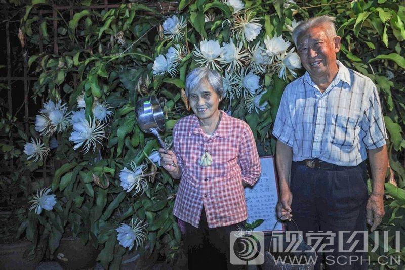 成都八旬老夫妻 50年种出年开300朵的昙花树