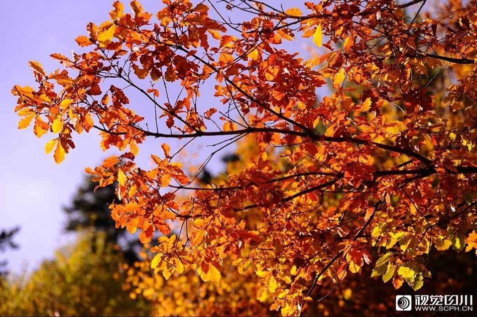 最多彩的季節已經到來!探訪四川秋日絕美秘境