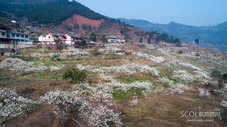 瞰龙泉山樱桃花林 浪漫春日气息来袭