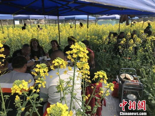 绵阳油菜花开 自然田园风光汇成了金黄色的画卷