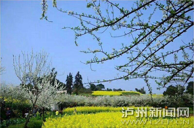 泸州春花吐露芬芳 市民畅享春的旋律