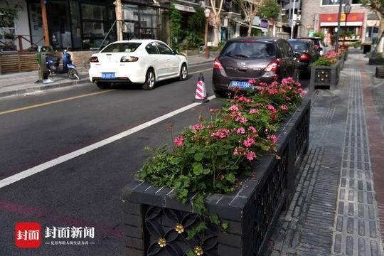 蓝花楹 老照片 成都这条网红街道焕然一新