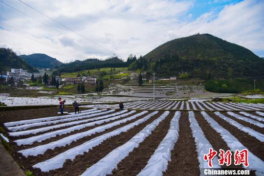 四川叙永千亩农田覆盖春天的希望
