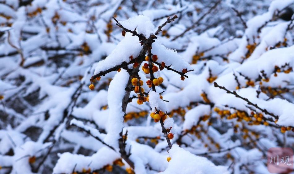 茂县松坪沟:红叶送秋往 白雪迎冬来