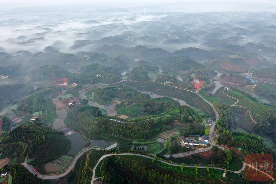 宜宾:智慧茶园见证生态巨变