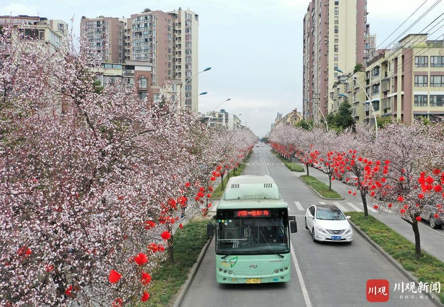 眉山:春暖花开香满城