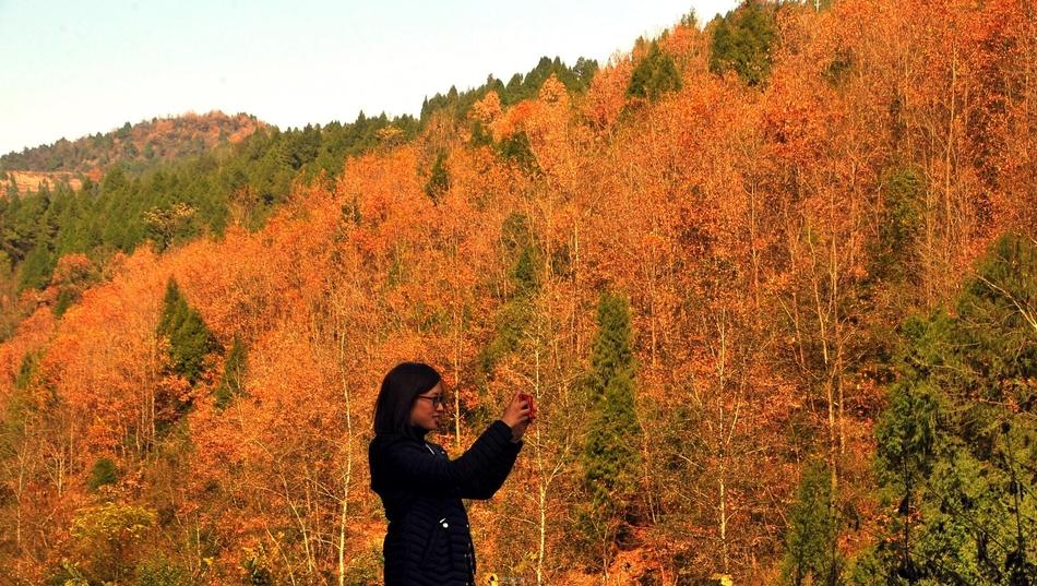 南充这个地方的彩林美若仙境 错过了再等一年