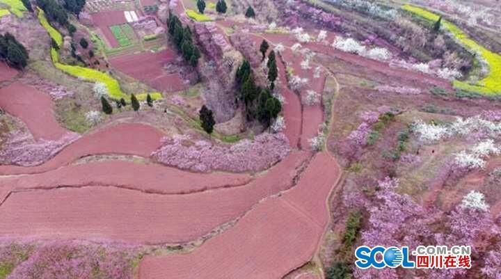 高空航拍:南充高坪荒山坡变身巨幅七彩画卷