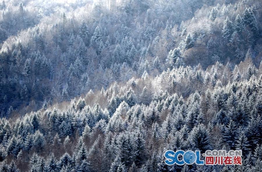 雅安宝兴硗碛藏寨迎来新春第一场雪 游人尽享雪中美景