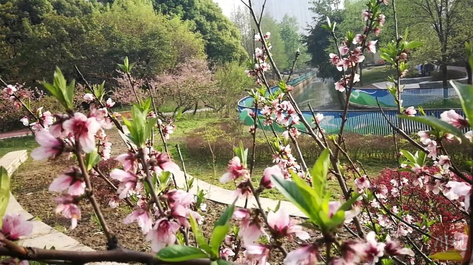 成都錦城湖濕地公園水霧彌漫,宛如仙境